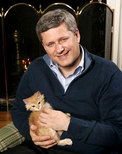Harper kitten.jpg