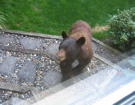 bear in bc.jpg