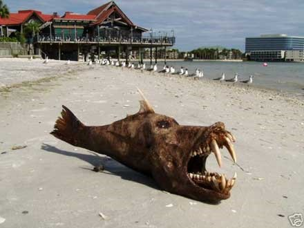 mudfish (beached).jpg
