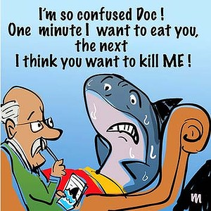 sharktherapy.jpg